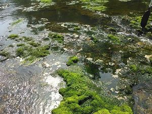 Mossy rocks 30.7959785, -83.4514465