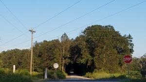 Tree tunnel, Spain Road @ Morven Road 30.8605509, -83.5162990