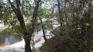 Downstream, Suwannee Springs