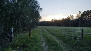 Gate open, Martin Lane, Lowndes County 30.7873910, -83.4457870