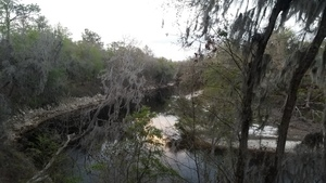 Looking upstream, Suwannee River