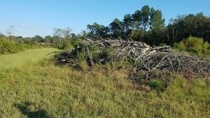 Trees piled up in a berm, Coffee Road, near Okapilco Creek 30.9183180, -83.5904140