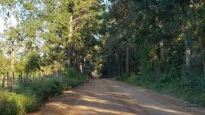 Tree tunnel, CR 10, Pauline Church Road 30.8939180, -83.5608330