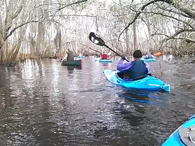 640x480 Movie: Under branches (1.0M), in Alapaha deadfalls, by John S. Quarterman, for WWALS.net, 17 January 2015