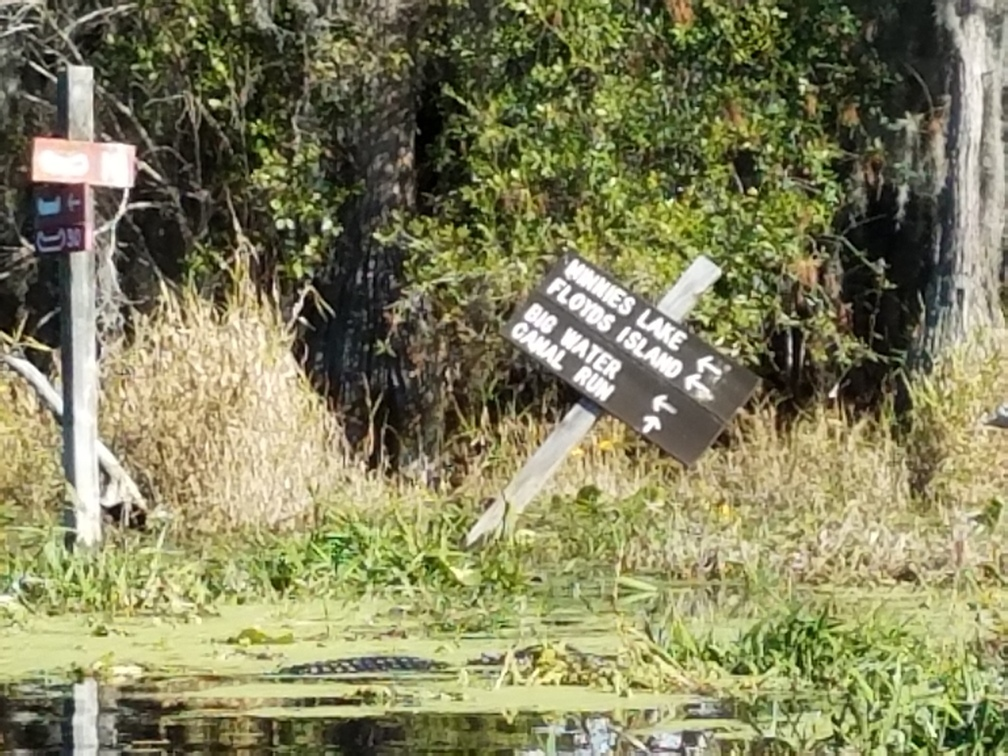 1008x756 Minnies Lake, Floyds Island, Big Water, Canal Run 30.8347222, -82.3430556, in Okefenokee Billys Island Outing, by John S. Quarterman, for WWALS.net, 10 December 2016