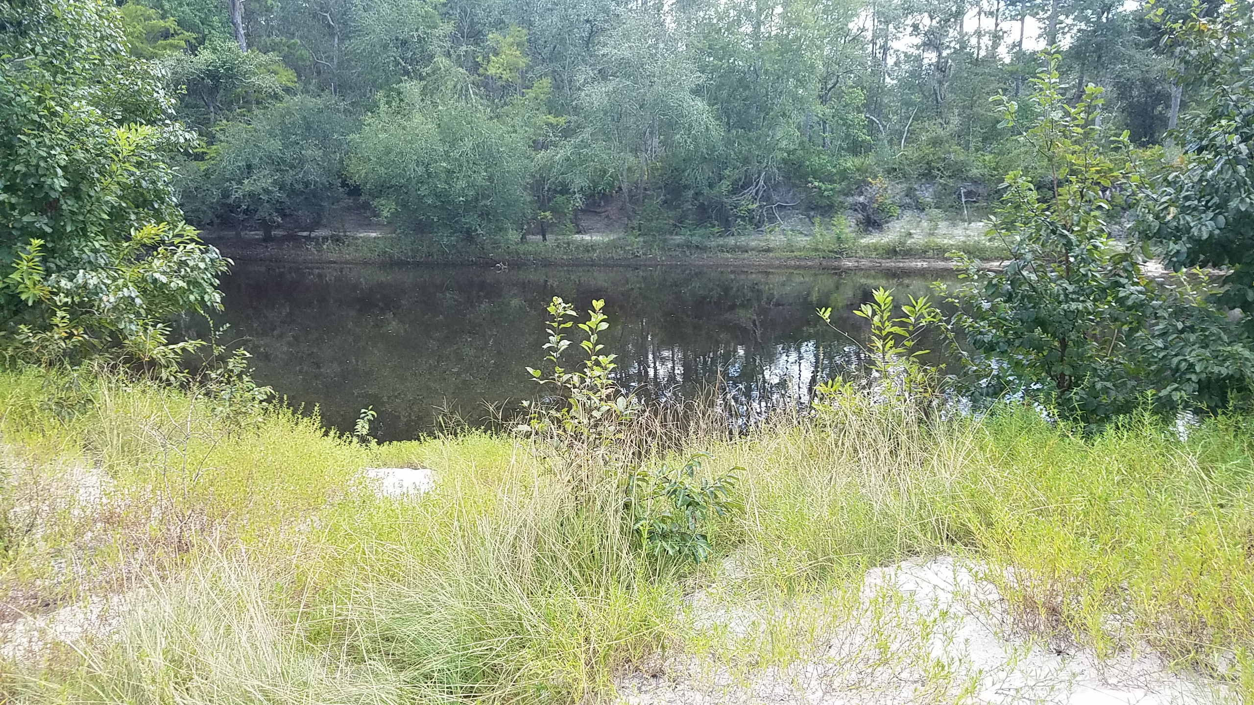 2560x1440 Green grass and blackwater, in Pafford's Landing, Alapaha River, by John S. Quarterman, for WWALS.net, 24 August 2017