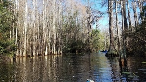 A bit of current, 11:24:56,, Middle Fork, Suwannee River 30.8526957, -82.3297734