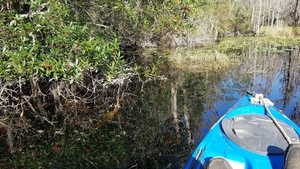 Reflected Holly, 10:37:44,, Middle Fork, Suwannee River 30.8375559, -82.3439512