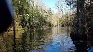 Around the bend, 11:22:27,, Middle Fork, Suwannee River 30.8375559, -82.3439512