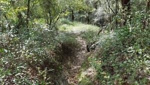 Path, 15:26:56,, Woods 30.6411700, -83.3364300