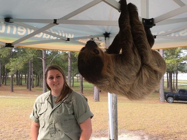 Sloth, Animals