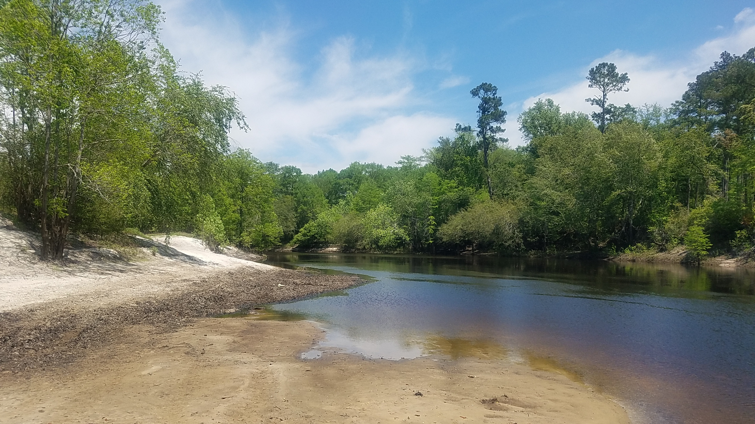 2560x1440 Upstream, Sandbar, in Pafford's Landing, Alapaha River Water Trail, by John S. Quarterman, for WWALS.net, 26 April 2018