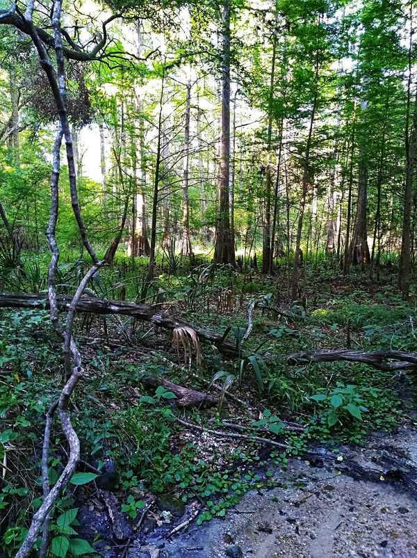 Woods and sunlight, Run