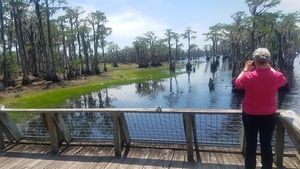 Grass starting to submerge, Boardwalk