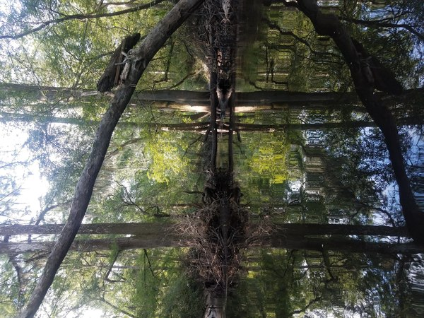 Log in tree, River