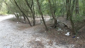 Trashed woods