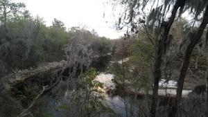 Looking upstream, Suwannee River