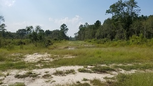 Looking west up Sabal Trail, Sinkhole