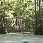 600x348 Birds in trees, in Stills from Video, by Bret Wagenhorst, May 2009