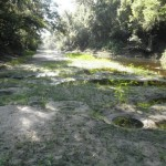 960x720 exposed bream beds near where we turned back; never did find where the water ended, in Alapaha, by Bret Wagenhorst, for WWALS.net, 1 September 2014
