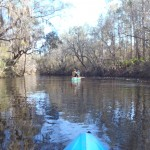 4288x3216 Blue on blackwater, in Alapaha River at Statenville, January 2014 WWALS Outing, by Gretchen Quarterman, 18 January 2014