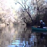 1280x720 Movie: Canoing downstream (10M), in Alapaha River at Statenville, January 2014 WWALS Outing, by Gretchen Quarterman, 18 January 2014