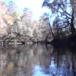 1280x720 Movie: On the lazy river (32M), in Alapaha River at Statenville, January 2014 WWALS Outing, by Gretchen Quarterman, 18 January 2014