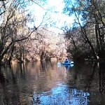 640x480 Movie: Paddling (5.5M), in Alapaha River at Statenville, January 2014 WWALS Outing, by Gretchen Quarterman, 18 January 2014