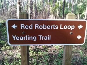 300x225 Red Roberts Loop, Yearling Trail, in BIG Little River Paddle Race, by John S. Quarterman, for WWALS.net, 16 May 2015