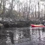 640x480 Movie: Banks (2.0M), in Statenville to Sasser Landing on the Alapaha River, by John S. Quarterman, for WWALS.net, 15 February 2015