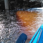 640x480 Red and yellow, in Statenville to Sasser Landing on the Alapaha River, by John S. Quarterman, for WWALS.net, 15 February 2015