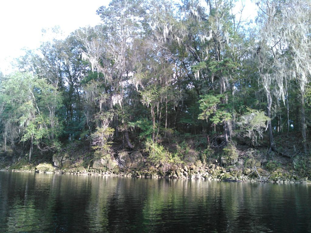 1024x768 Far side of the river, in WWALS Field Trip to proposed Sabal Trail Suwannee River Crossing, by John S. Quarterman, for WWALS.net, 15 November 2015
