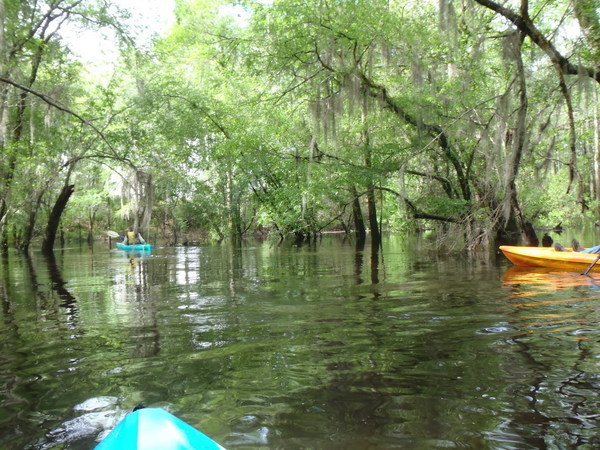 Three paddlers, Withlacoochee River, 2014-04-20