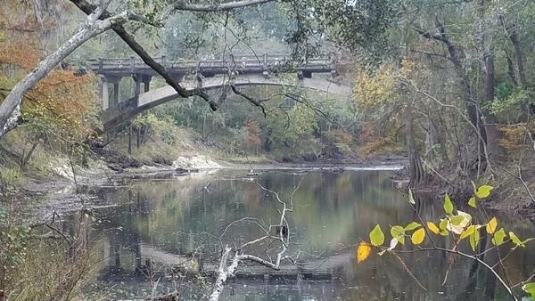 Birds and branches, 13:19:19,, Spook Bridge
