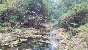 Downstream, Volunteers