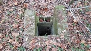 Pond chimney, 14:05:52,, Wade Spring 30.7969513, -83.4545180
