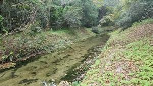 Channelized, but still a creek, Undercut