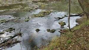 Movie: Rapids, 13:28:22, (21M), Upstream of US 84 30.7913497, -83.4568524