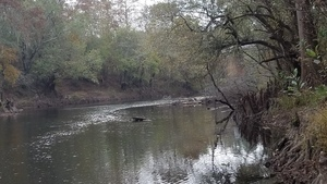 Upstream to RR bridge, 13:15:58,, Spook Bridge 30.7915593, -83.4526473