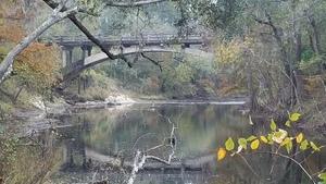Birds and branches, 13:19:19,, Spook Bridge 30.7900038, -83.4585197