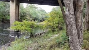 Willows upstream, 10:07:23,, Nankin Boat Ramp 30.6748700, -83.3942500