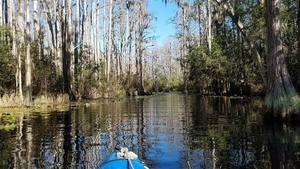A straight bit, 11:32:13,, Middle Fork, Suwannee River 30.8539807, -82.3291257