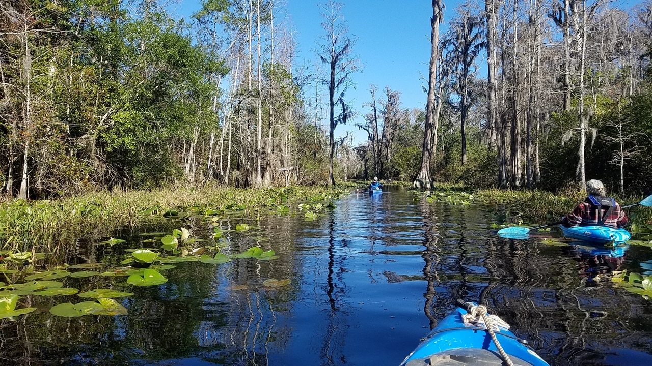 1280x720 Minnie Lake, Shirley Kokidko, Gretchen Quarterman, 11:42:54, 30.8558922, -82.3270201, Minnie Lake, in One alligator, some turtles, many birds: cold and clear Okefenokee Outing, by John S. Quarterman, for WWALS.net, 10 December 2017