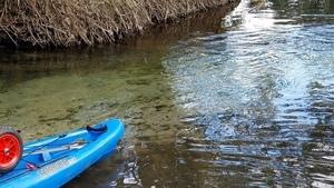 Blue-green spring water, 15:12:46,, Arnold Springs 30.6411465, -83.3367514