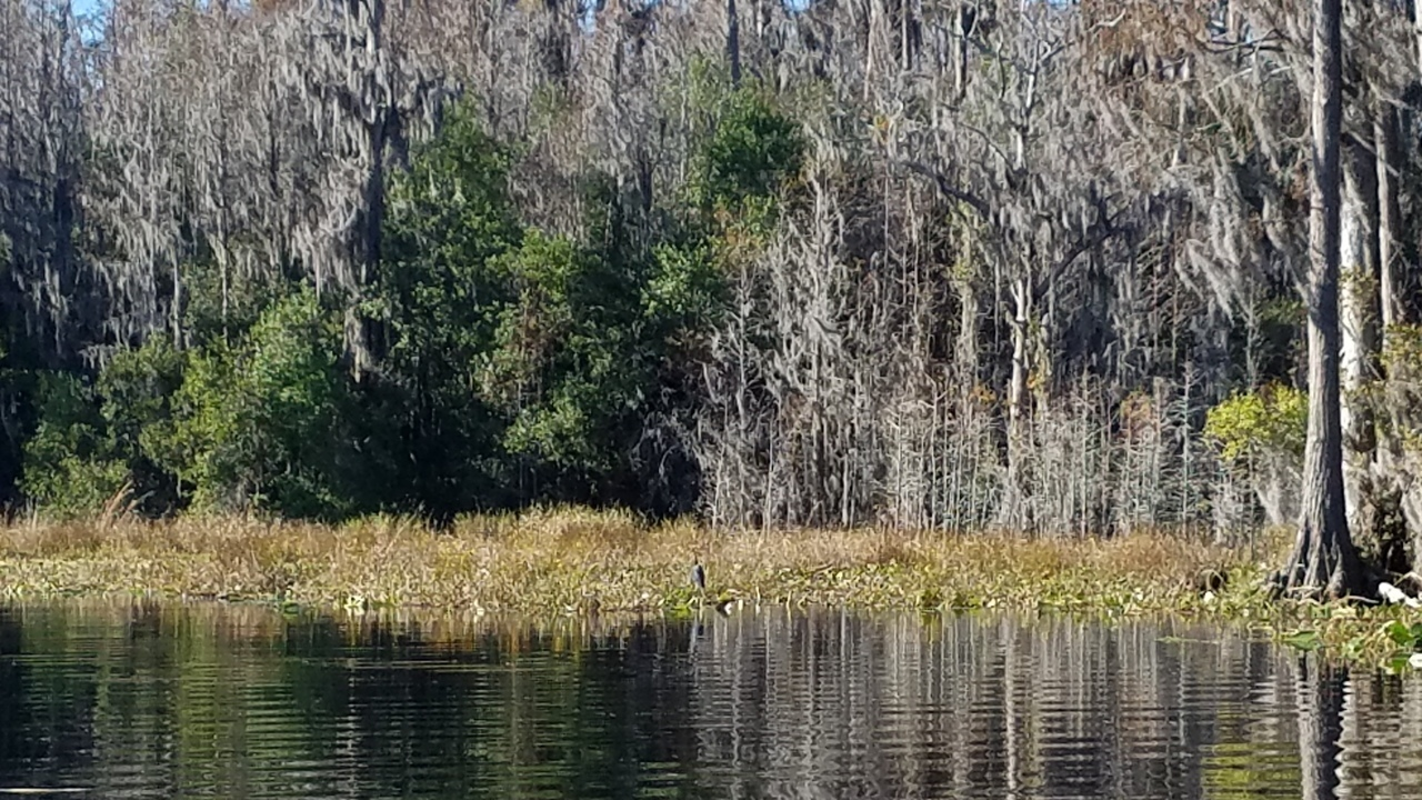 1280x720 Sitting anhinga, 14:28:33, 30.8347267, -82.3487198, Back on the main river, in One alligator, some turtles, many birds: cold and clear Okefenokee Outing, by John S. Quarterman, for WWALS.net, 10 December 2017