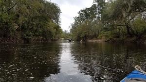 Wrested vegetation, 11:14:21,, Downstream 30.6568200, -83.3670700