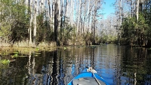 Shirley and the birds, 11:32:17,, Middle Fork, Suwannee River 30.8558922, -82.3270201