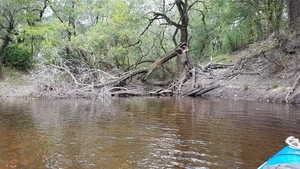Creek and river water, 11:46:18,, Clyatt Mill Creek 30.6537131, -83.3624839