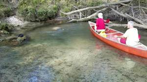 Movie: Diver coming up, 15:27:16,, Arnold Springs 30.6410400, -83.3370200