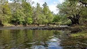 Movie: Margaret Tyson shoots the rapids,, Tween Creek Shoals 30.6557356, -83.3645934